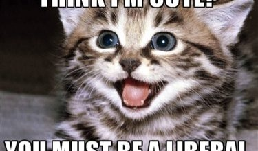 """Photo of Study Says """"Like Kitties? You Might Be A Liberal!"""""""