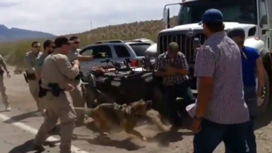 Photo of The Feds, Nevada's Bundy Ranch & Tortoises