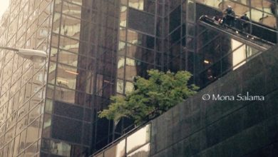 Photo of Man Climbing Trump Tower Wanted Personal Meeting with Donald Trump