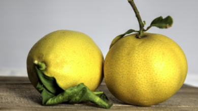 Photo of Lemons (Not Apples) For the Yellow Journalism Teachers
