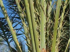 Photo of Palm Sunday: God as a Gardener